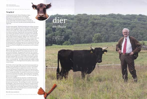 jan-van-wersch-koeien